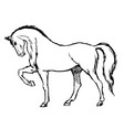 freehand sketch of horse vector image vector image