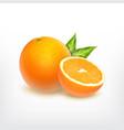 orange fruit and orange slice vector image vector image