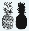 Ripe tasty pineapple vector image