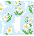 seamless floral light pattern with camomile vector image