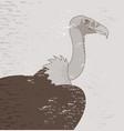 vintage vulture vector image vector image