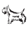 decorative standing portrait of scottish terrier vector image