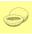 hand drawn isolated melon Organic food vector image vector image