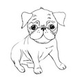 english bulldog french bulldog dog on a white vector image