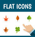 flat icon foliage set of aspen foliage leafage vector image vector image