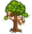 Two monkeys on the tree vector image vector image
