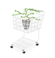Bonsai Tree and Plant in A Shopping Cart vector image