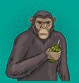monkey with grenade pop art vector image