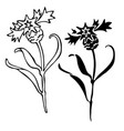 thistle flowers in black and white style can be vector image vector image