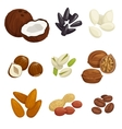 Nuts grain and kernels icons vector image