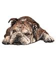 Bulldog 03 vector image vector image