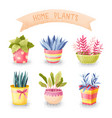 flowers in pots set vector image vector image