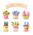 Flowers in pots set