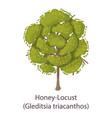 honey locust icon flat style vector image vector image