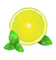 juicy lemon or lime and leaves of peppermint icon vector image vector image
