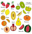 a set of hand-drawn cute fruit for design vector image