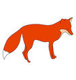 red fox on white background vector image