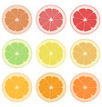 lemon orange grapefruit and lime vector image
