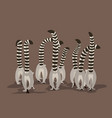 a flock of lemurs vector image vector image