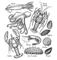 sea animals big set vector image
