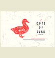 stock duck diagram vector image