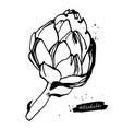 artichoke sketch vector image