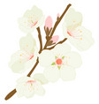 blossoming almond tree branch with flowers vector image vector image