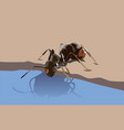 ant drinking water vector image vector image