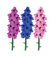violet blue and pink delphinium flowers with vector image vector image