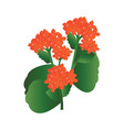 orange kalanchoe flowers with green leafs on vector image vector image