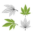 cannabis leaf on a white background vector image vector image
