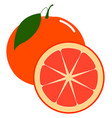 fresh grapefruit on white background vector image vector image