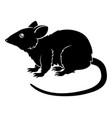stylized rat vector image