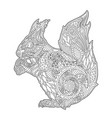 adult coloring book page with beautiful squirrel vector image vector image