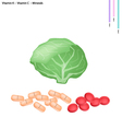 Cabbage with Vitamin K and Vitamin C vector image vector image