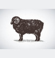 ram graphic silhouette drawn hand on paper and vector image