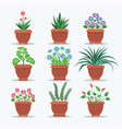 room plants set flourishing vector image vector image