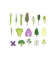 salad greens and leaves set vegetarian healthy vector image vector image
