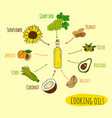 hand drawn infographic of cooking oil sorts vector image vector image