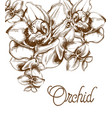 orchid flowers and line art old effect bouquet vector image vector image