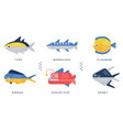 sea and ocean fishes collection tuna barracuda vector image