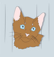 cat lies in the room vector image vector image