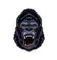 colorful dangerous angry gorilla head vector image vector image