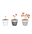 Three Straw Mushrooms in Ceramic Flower Pots vector image