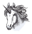 Unicorn horse mystic magic animal sketch