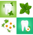 tooth care design vector image vector image