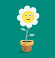 character daisy flower in a pot vector image vector image