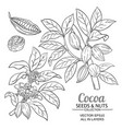 cocoa plant set on white background vector image vector image