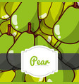 delicious pear fresh fruit label pattern vector image