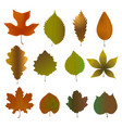 fallen leaves set of vector image vector image